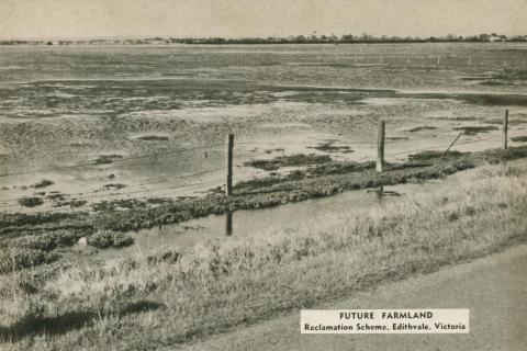 Future farmland, reclamation scheme, Edithvale, 1954