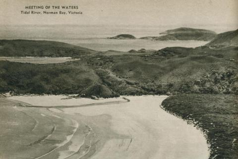 Tidal river, Norman Bay, 1954