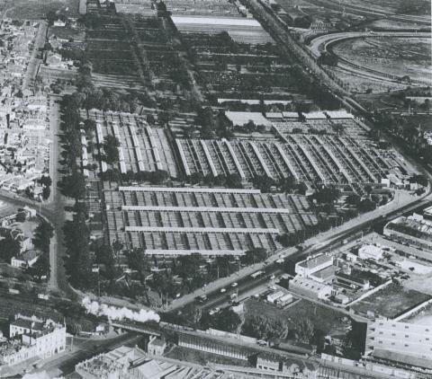 Newmarket Saleyards, Kensington, 1953