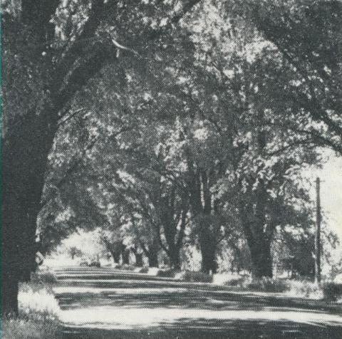 Avenue of Honour, Bacchus Marsh, 1968