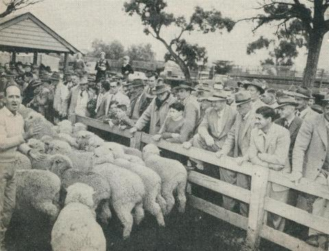 Selling stock at the Municipal Saleyards, Horsham, 1960