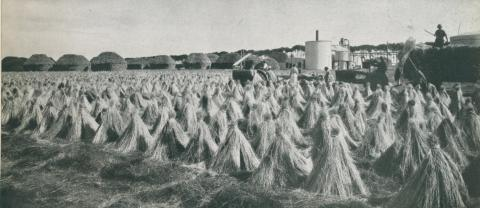 Flax de-seeding operations, stacks and mill, Lake Bolac, c1952
