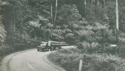 Timber Transport, Dandenongs, c1952