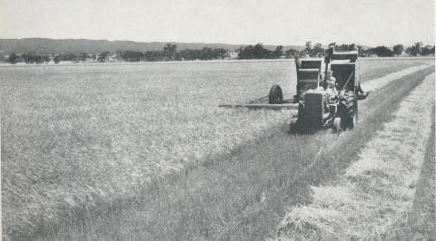 Harvesting barley, Balliang, 1958