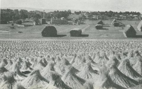 Flax production, Drouin, 1955