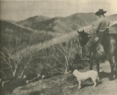 Mount St Bernard, Dargo High Plains, 1950