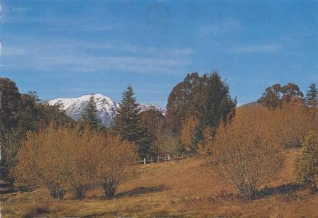 Snow-capped Mount Buller as viewed from the Mansfield Road