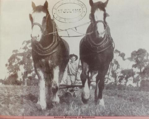 Autumn ploughing at Bayswater, 1946
