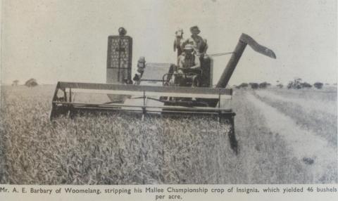 Mallee championship crop, Woomelang, 1956