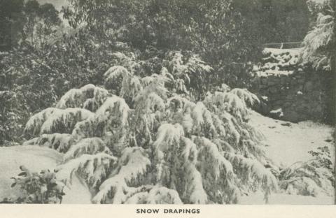 Snow Drapings, Mount Buffalo, 1953