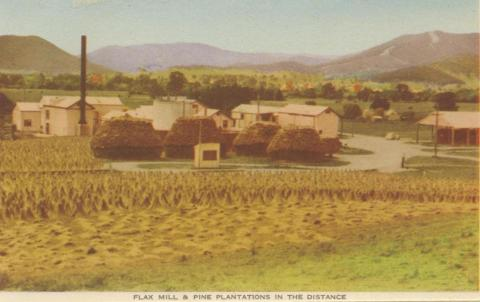 Flax Mill and Pine Plantations in the distance, Myrtleford, 1953