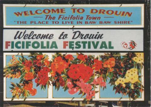 Drouin Ficifolia Festival