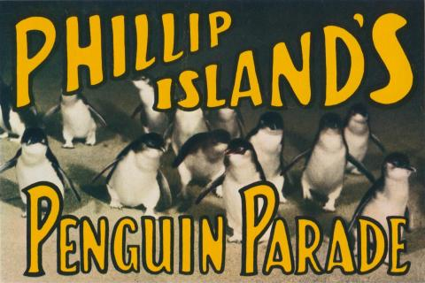 Phillip Island's Penguin Parade