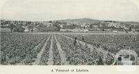 A vineyard at Lilydale, 1918