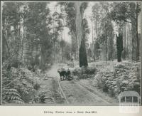 Carting timber from a bush saw-mill, Gippsland, 1918