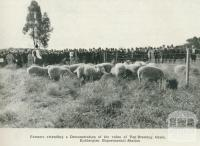 Farmers attending a demonstration of the value of top-dressing grass, Rutherglen Experimental Station, 1918