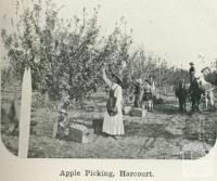 Apple picking, Harcourt, 1918