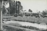 Dairy Farm at Tongala, 1964