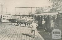 Unloading cattle at Newmarket Livestock Siding, 1950