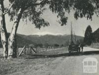 Harrietville Road, showing Mount Hotham, 1960