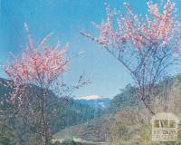 The Bogong High Plains, 1971
