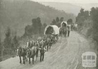 Teamsters, Walhalla, c1910