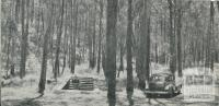 Spa in the woods, Lyonville, 1959