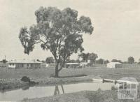 An irrigated property at Waaia, 1964