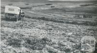 Land clearing for development, Heytesbury, 1958