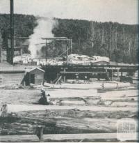 Saw mill by the forest, Cabbage Tree Creek, 1955