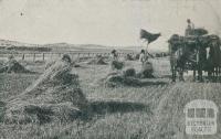 Carting in the crop, Colbinabbin, 1911