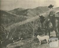 Mount St Bernard, Dargo High Plains, 1950