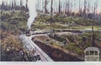 Beech Forest, Railway, 1907