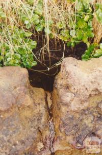 Aboriginal Well, Ricketts Point, Beaumaris, 2001