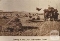 Carting in the crop, Colbinabbin Estate, 1911