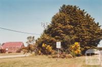 CWA plantation and St Johns Roman Catholic Church, Lismore, 2009