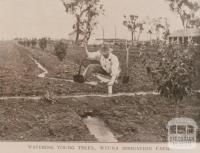 Watering young trees, Wyuna irrigation farm, 1908