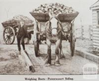 Weighing beets, Powerscourt siding, Maffra, 1920
