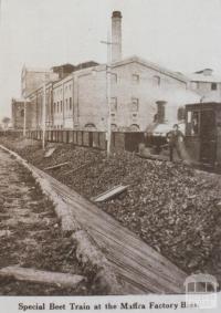 Special beet train at Maffra factory bins, 1920
