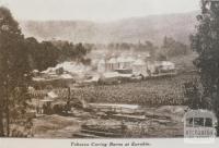 Tobacco curing barns at Eurobin, 1932