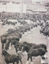 Ascot Vale Royal Show parade, 1935