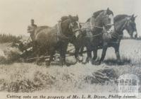 Cutting oats, Phillip Island, 1940