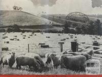 Yarra River flats near Mooroolbark, 1946
