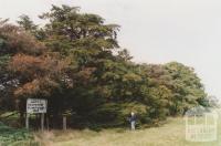 Centenary of white settlement plantation (1938), Ascot, 2010