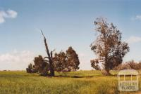 Hans Young Farm, Glenloth East, 2010
