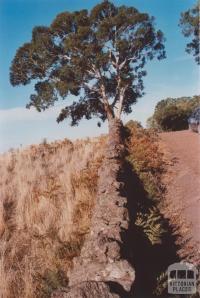 Stone Fence, Pomborneit, 2013