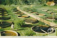 Circular Ponds at the Snob's Creek Fish Hatcheries