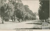 Avenue leading to Orbost, 1947