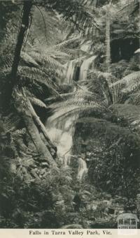 Falls in Tarra Valley Park, 1949