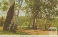 Picnic Ground, Tyers River